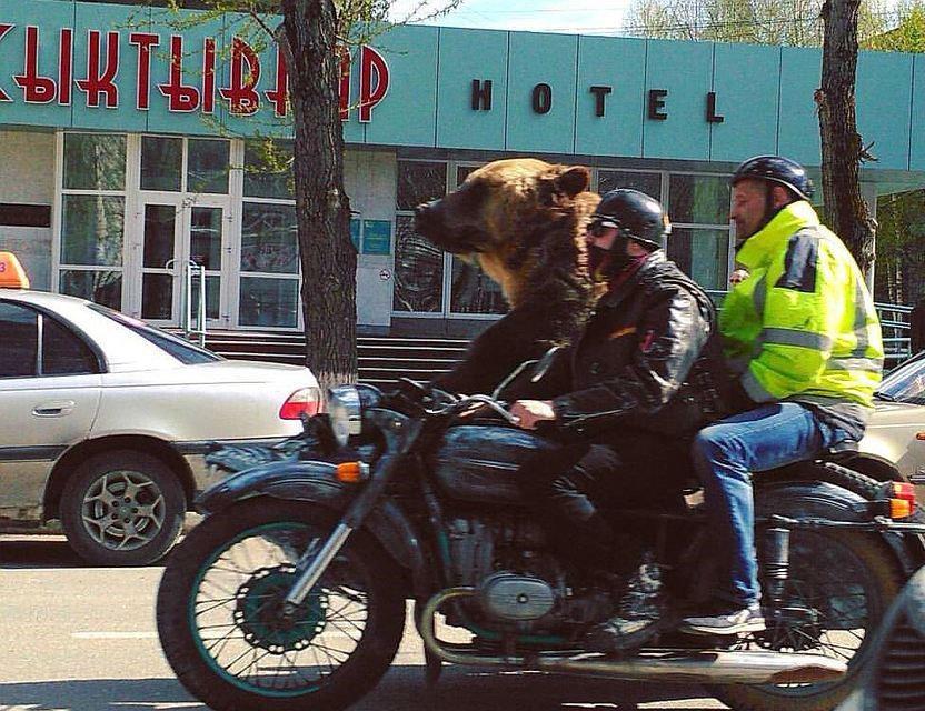В Сыктывкаре угнали мотоцикл, на котором катали медведя по городу