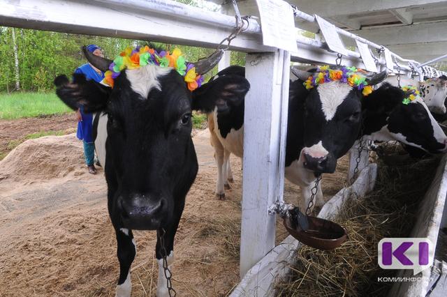 В Вуктыльском районе появится новая семейная животноводческая ферма
