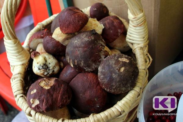 В Коми собрали первый урожай белых грибов