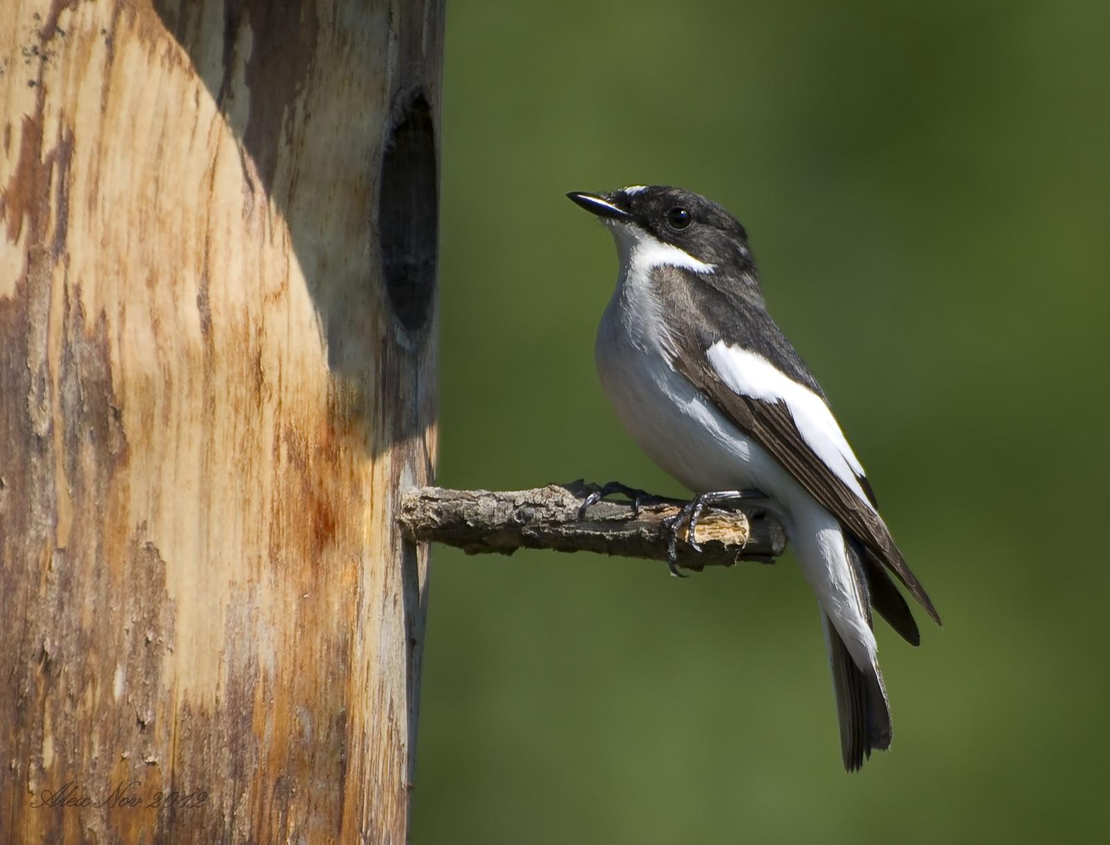 В Коми из-за погодных аномалий птицы с трудом выживают и выкармливают птенцов
