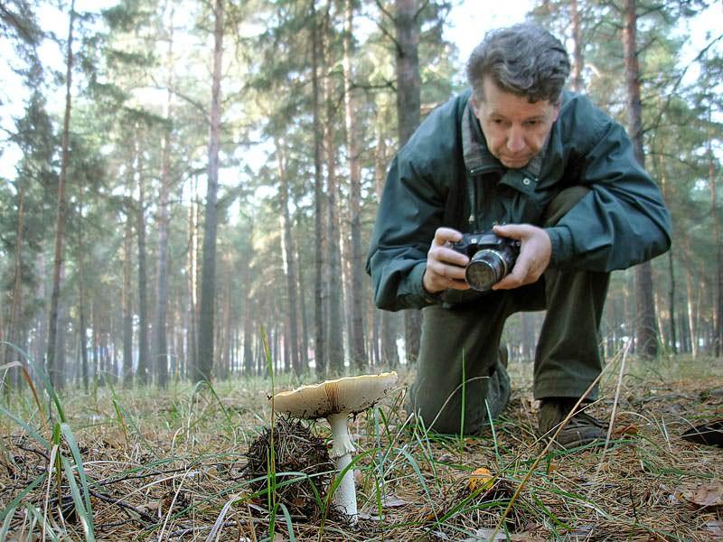 В Коми обнаружили 27 новых видов грибов