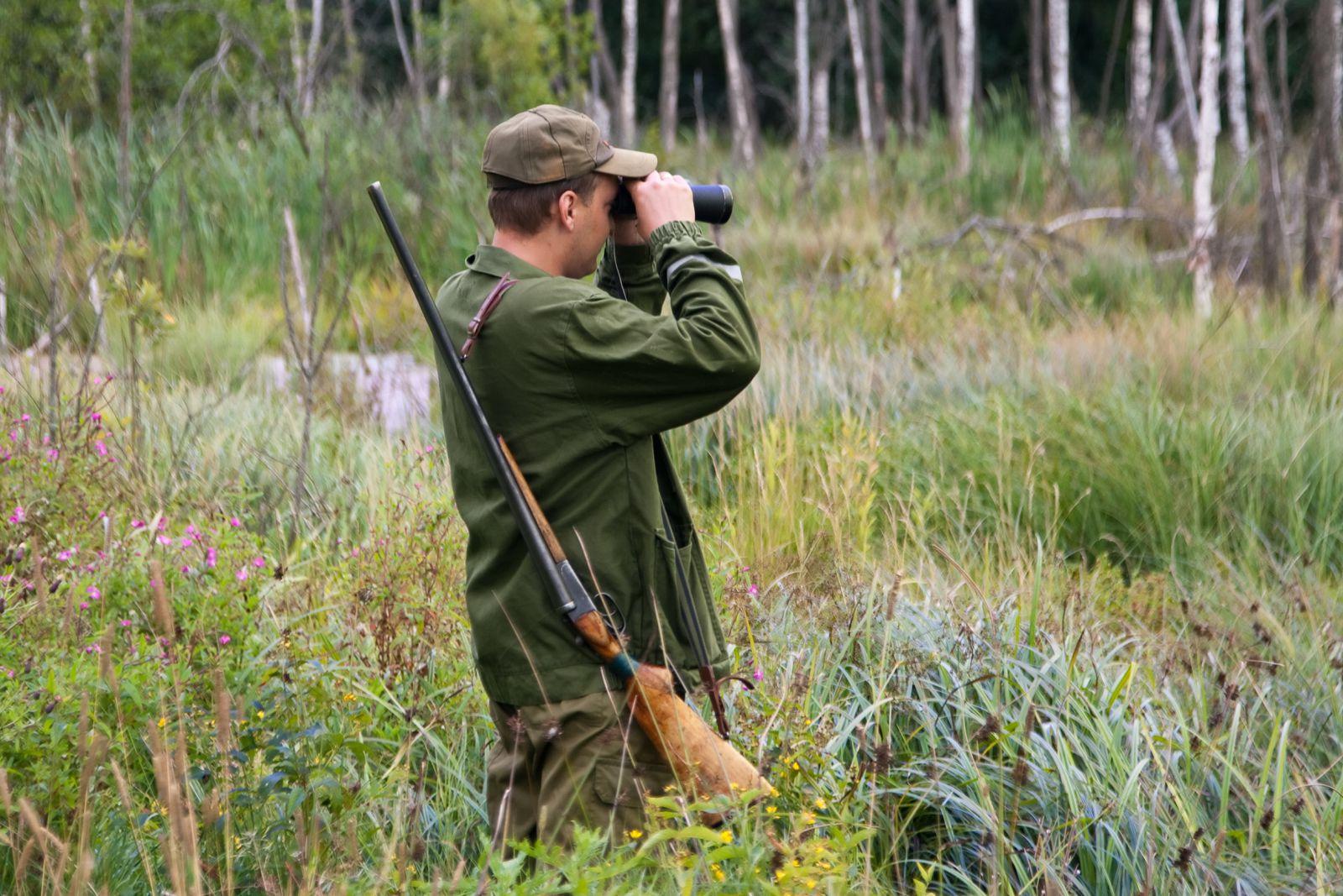 Охотнадзор Коми разъяснил, как получить разрешение на добычу лося