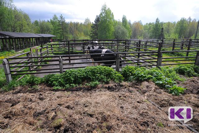 В Коми зарегистрировано 16 сельскохозяйственных потребительских кооперативов