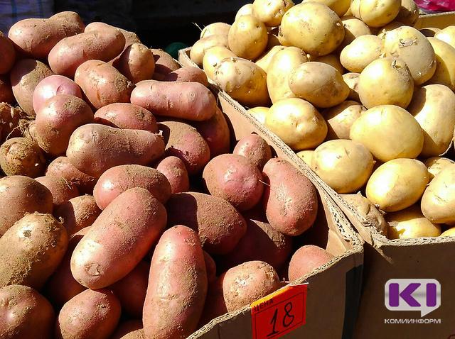 Фитофтора угрожает картофелю в Коми, ягоды атаковала американская мучнистая роса