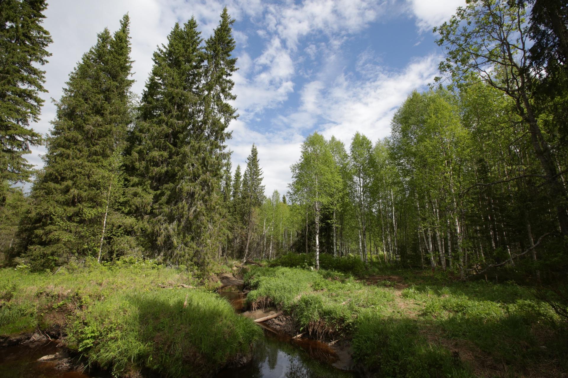 ЛУКОЙЛ-Коми построит новый гидрозатвор в Ухтинском районе