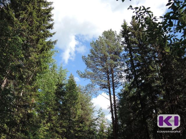 Жители Усть-Куломского района недовольны деятельностью СЛДК