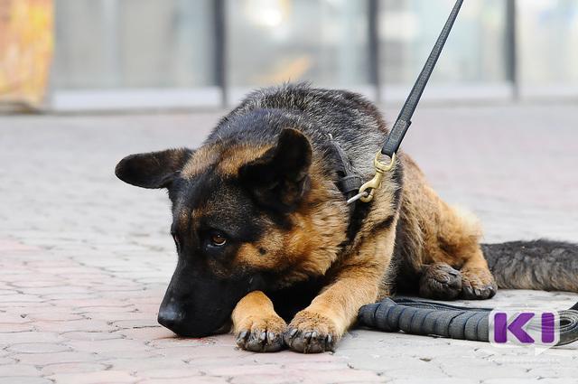 Сыктывкарский кинолог позарился на 20 упаковок сухого корма для служебных собак