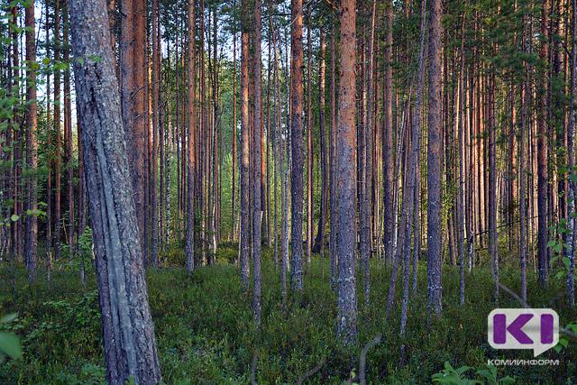Жительница Усть-Куломского района скрылась от спасателей в лесу