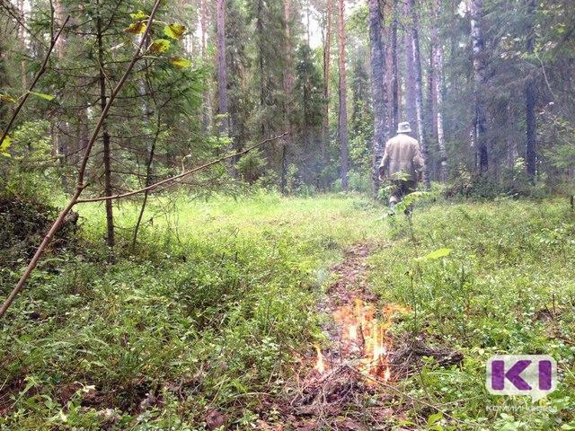 В лесах Усть-Вымского района спасатели весь день искали пожилого грибника
