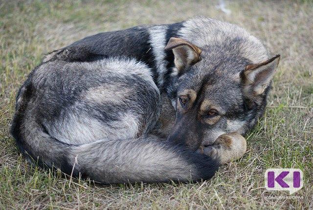 Спасатели Коми достали из колодца собаку