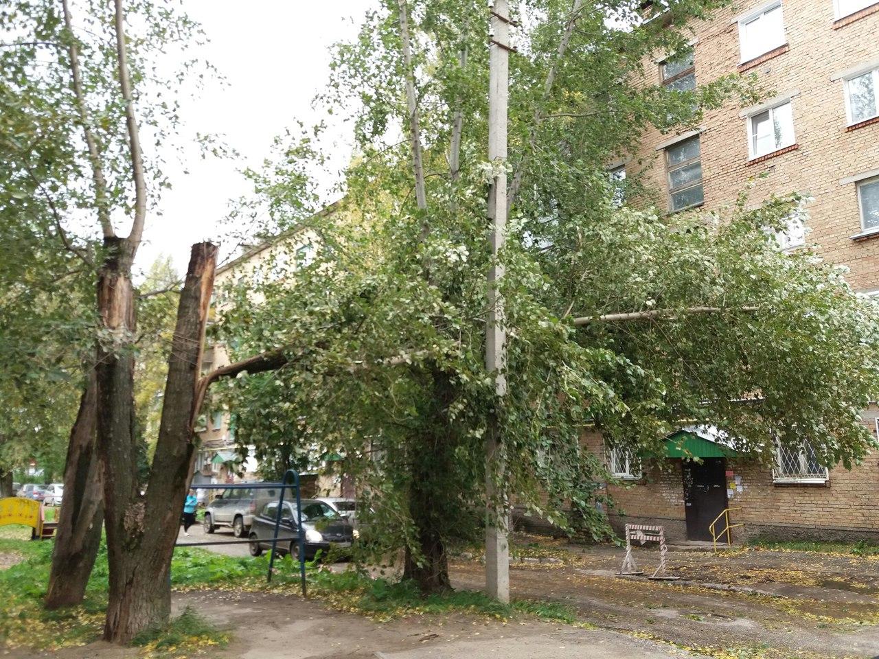 В Коми сильный ветер и упавшие деревья прибавили спасателям работы на выходных