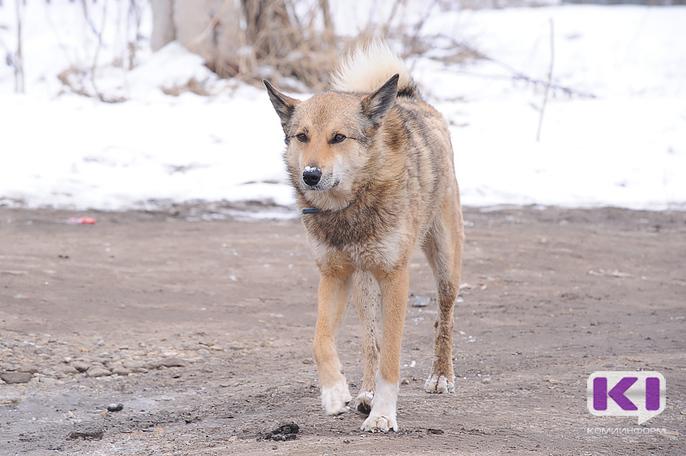 В Коми глава села оштрафован за отказ в удовлетворении жалобы по отлову бродячих собак