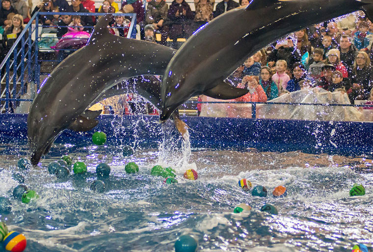 В России хотят запретить передвижные дельфинарии и контактные зоопарки