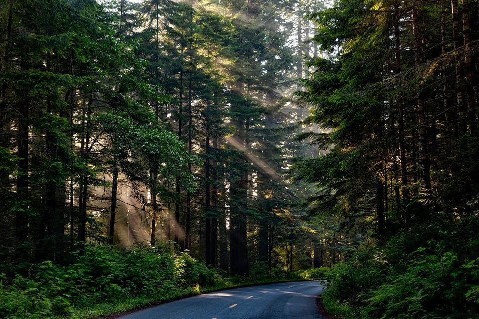 Дорогие дороги: тест на знание фактов о дорогах