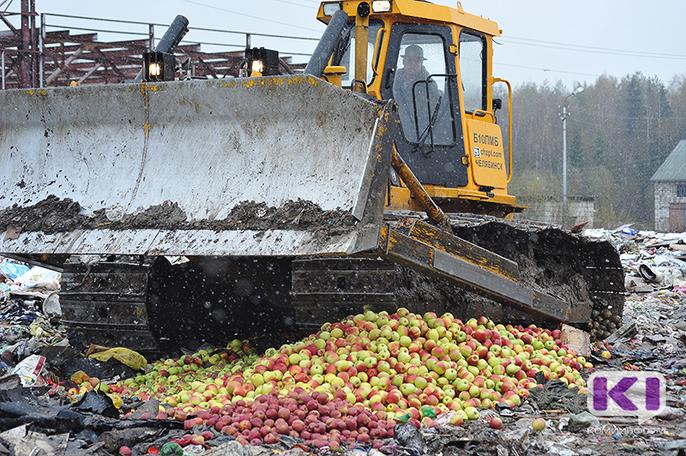 В Сыктывкаре уничтожили груши и яблоки из Польши