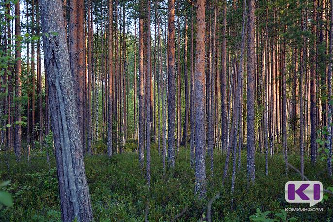 Изменения в Лесном кодексе России позволят властям Коми вносить дополнительные условия в договоры аренды лесных делянок