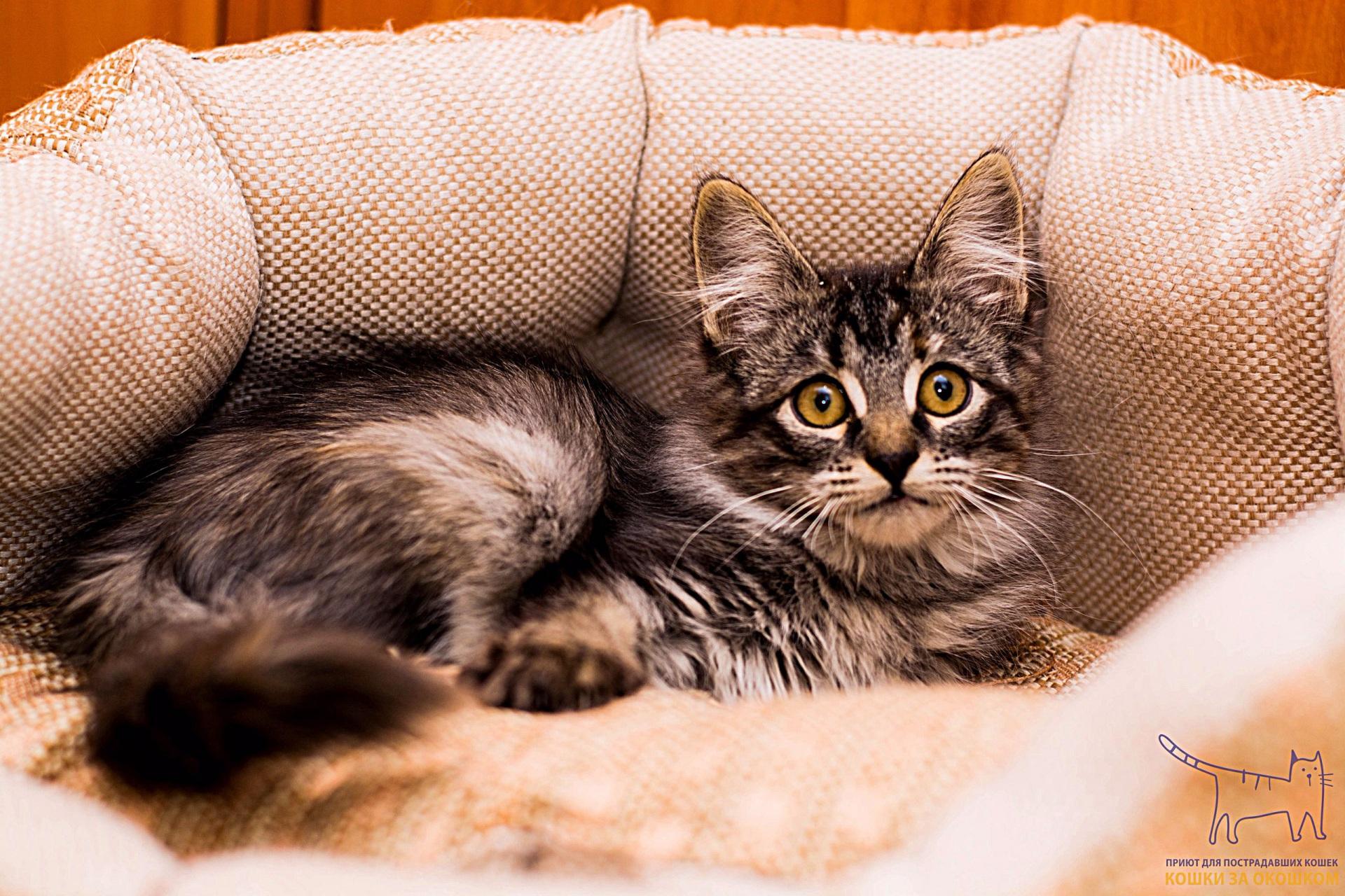 Коты и кошки ждут сыктывкарцев на