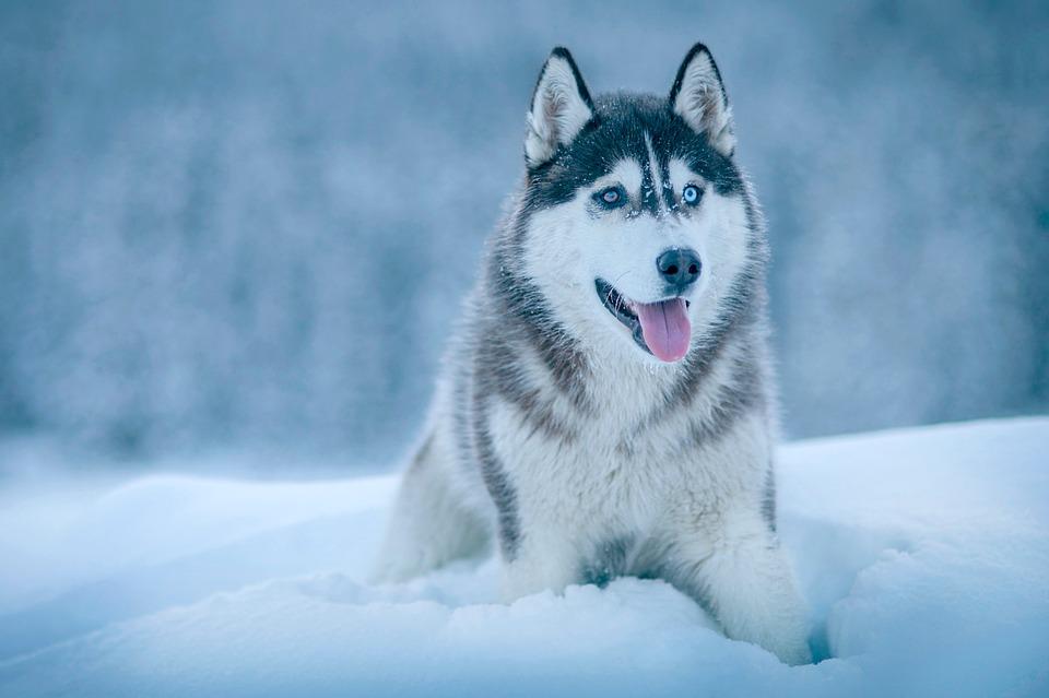 В Сыктывкаре можно будет ради доброго дела пообниматься с собаками