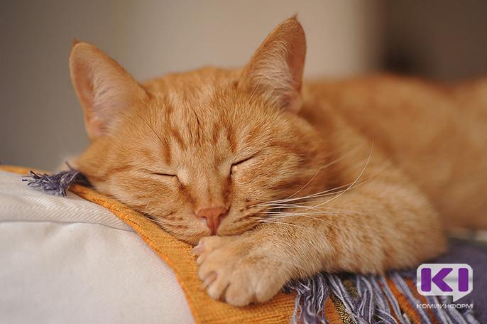 Ухтинца будут судить за гибель кота в стиральной машине