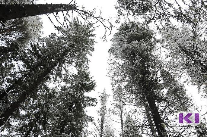 ОНФ предлагает реформировать управление лесами