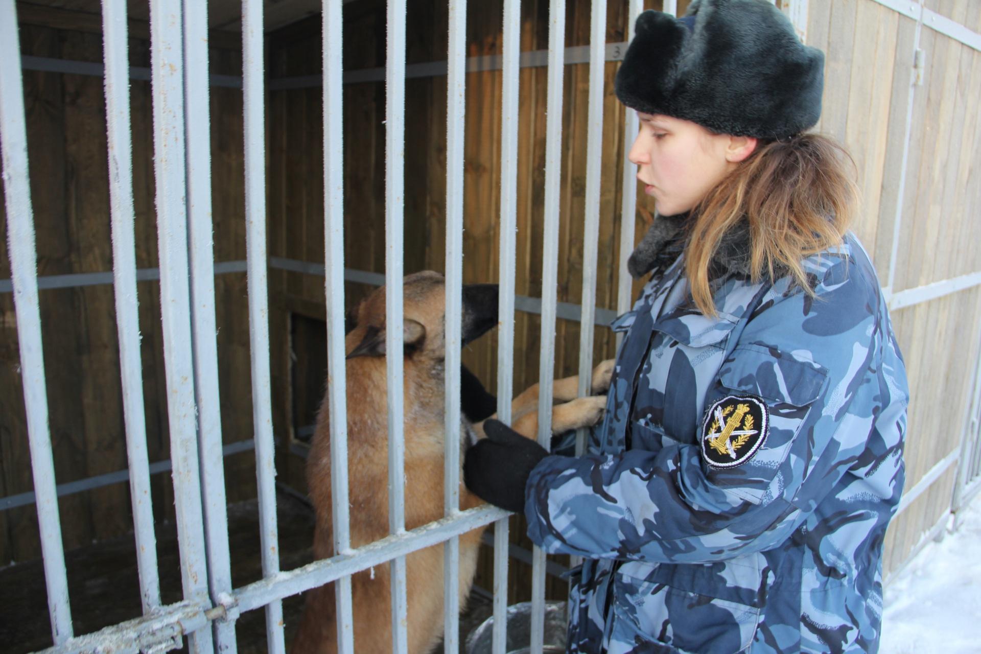 В колонии Коми будут разводить служебных собак