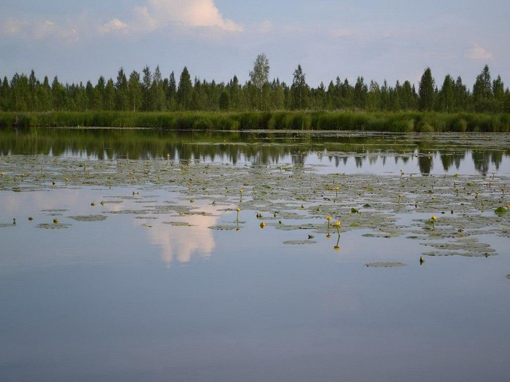 """""""Хочу творить добро"""" в Коми: молодежь Усть-Кулома наведет экологический порядок на озере Дон"""