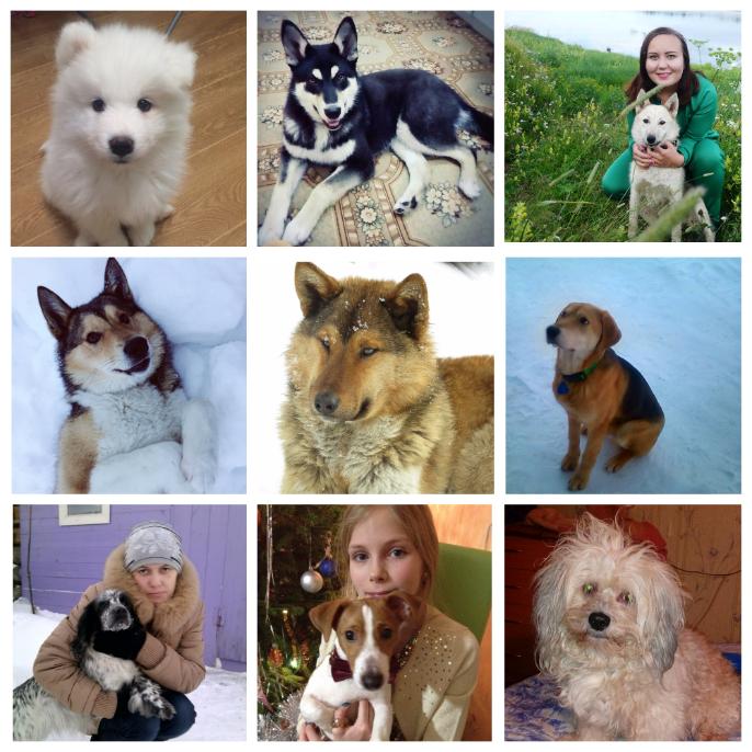 На Удоре выбирают пса, который станет символом 2018 года