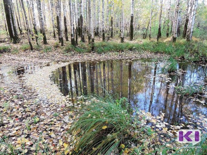 Жителей Объячево беспокоят опилки в водоохранной зоне