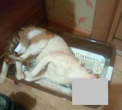 ВКоми осудили живодера, который убил кота встиральной машине