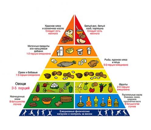 piramida-pitaniya.png