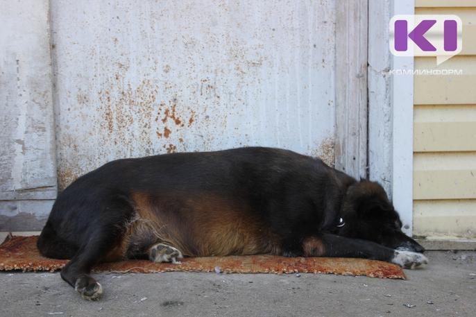 В Подзи массово погибли собаки