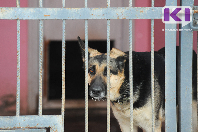 В Ухте на отлов бездомных собак планируют потратить почти полмиллиона рублей
