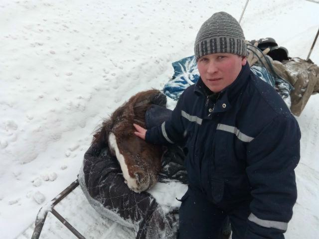 Cотрудники экстренных служб вызволили лошадь изсугроба вКоми