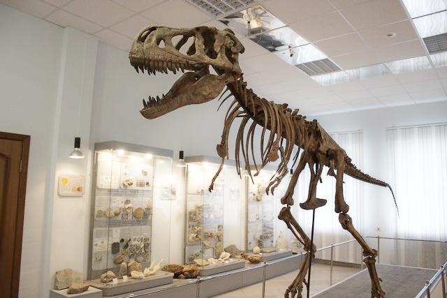 paleontologiya_001.jpg