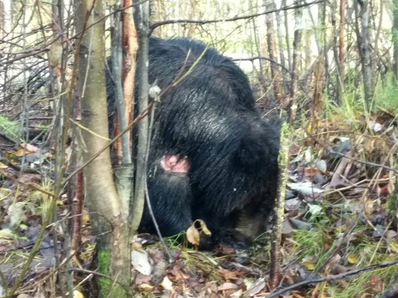 Medvedi01.jpg