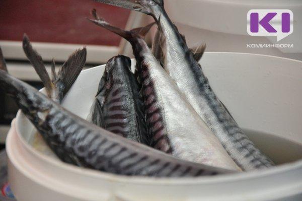 Рыба с мышьяком продолжает поступать из Архангельска и Мурманска в Коми