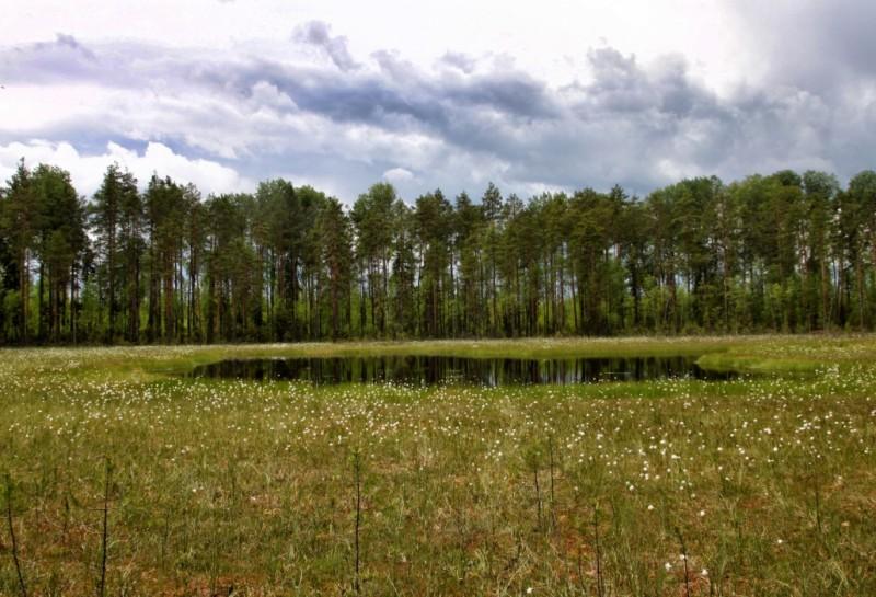 В Коми ученые исследуют таинственное озеро, которого не было на картах