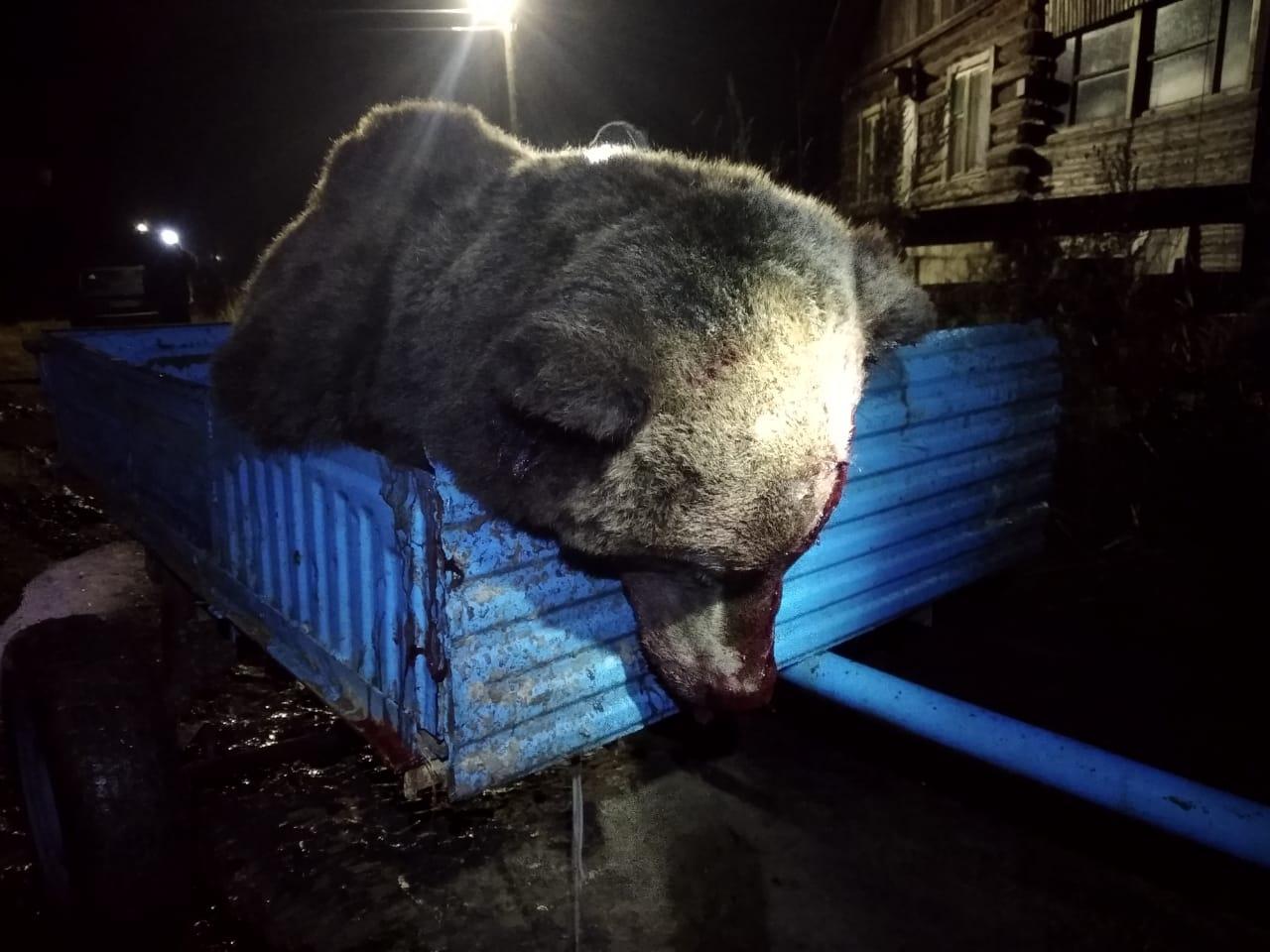 Медведь, который разобрал машину в Сыктывдинском районе ...