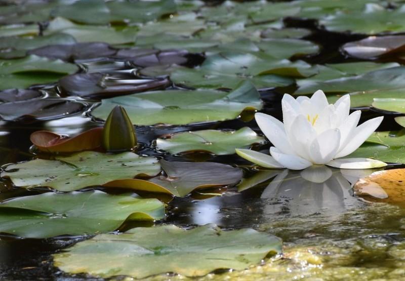 Реликтовое озеро Дон-ты
