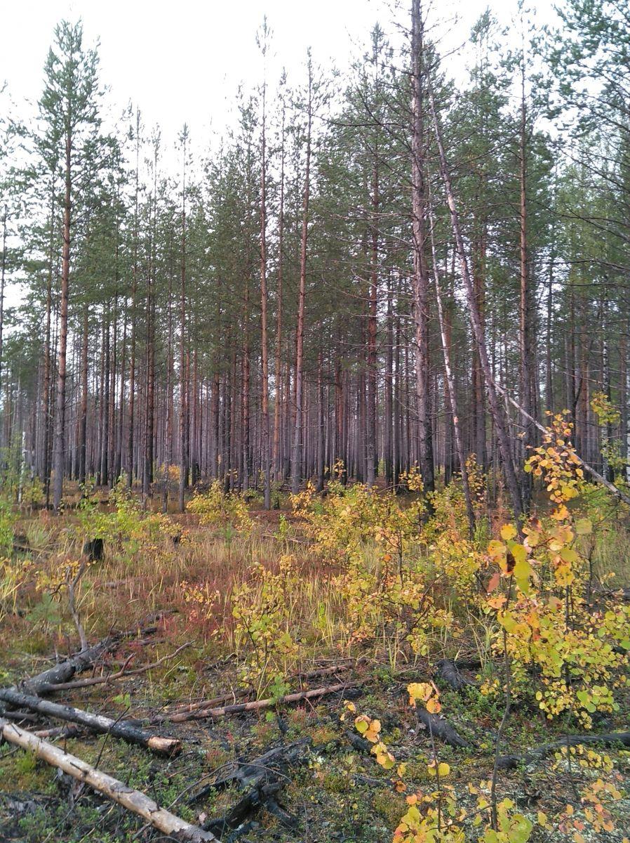 Prupkoe-Nyumydskoe-18-1_08092021_060107.jpg