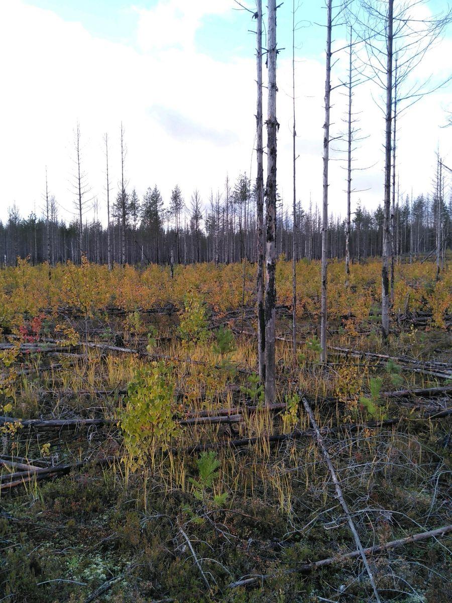 Prupkoe-Nyumydskoe-51-40_08092021_082250.jpg